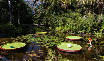 In 1932, Arthur G. McKee And Waldo E. Sexton Opened McKee Jungle Gardens On  An 80 Acre Tropical Hammock In Vero Beach, Florida.